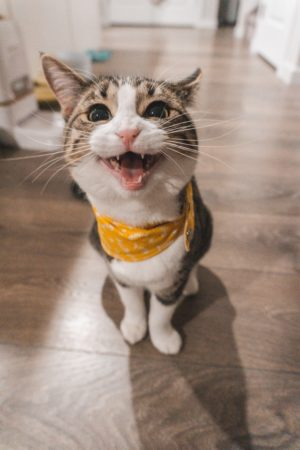 "<span class=""title"">DIY 猫 猫侵入防止柵 猫脱走防止柵 製作</span>"